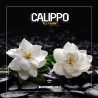 Cover Calippo - All I Want