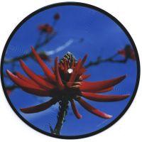Cover Depeche Mode - Precious