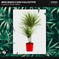 Cover Mike Mago x Dog Collective - Always On My Mind